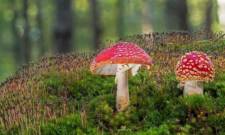 Suchen, finden, essen – Tipps für das Pilzesammeln im Herbst