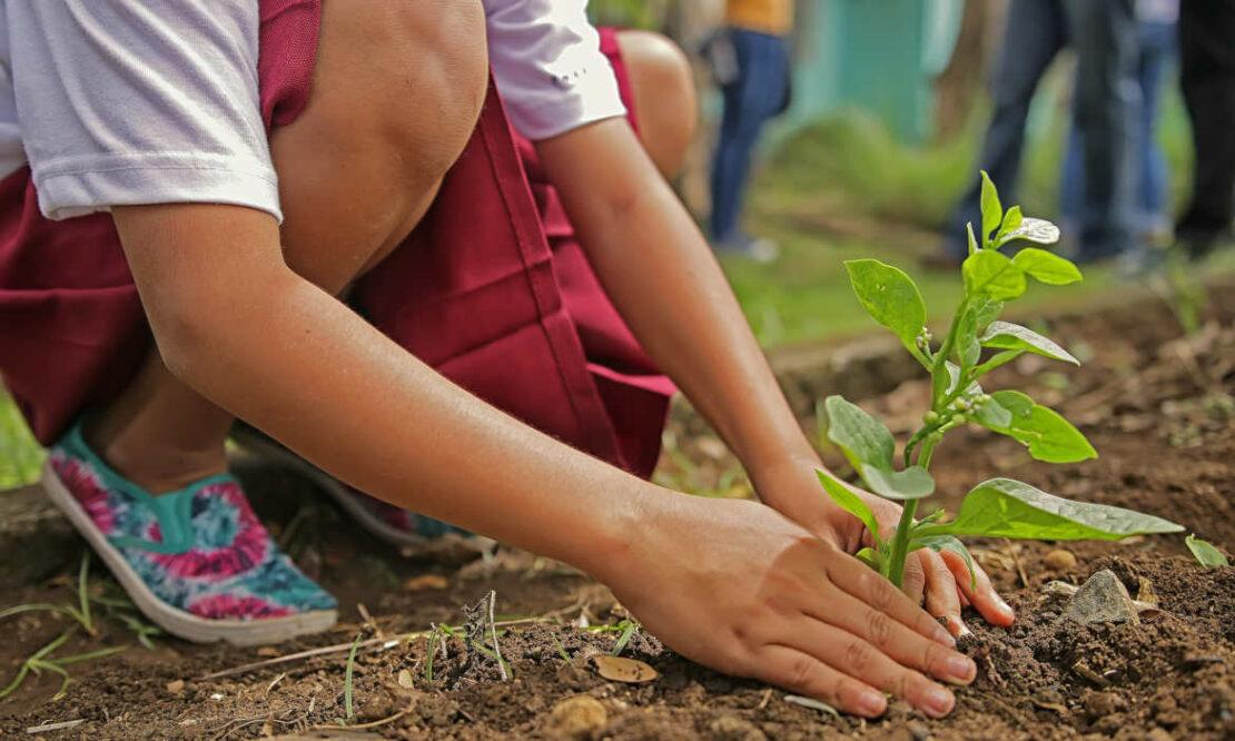 Trend zur Nachhaltigkeit: Grüne Versicherungen auf dem Vormarsch