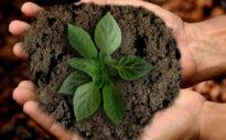 Geld anlegen mit gutem Gewissen: So arbeiten nachhaltige ETFs