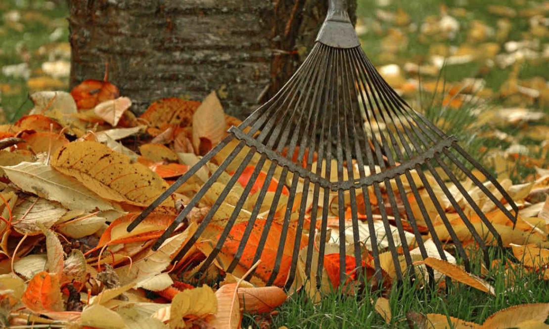 Sturzgefahr durch Herbstlaub: Wer die Blätter vom Gehweg räumen muss