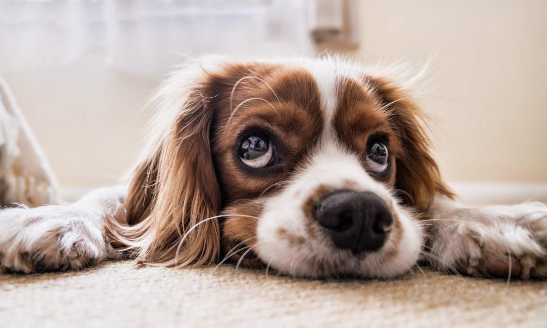 Corona-Krise führt zu Haustier-Boom: Der richtige Versicherungsschutz für Hunde