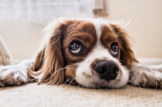 Der richtige Versicherungsschutz für Hunde